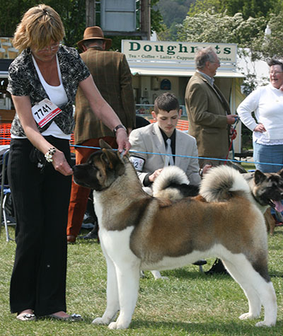 Faith winning RCC at her first Champ Show